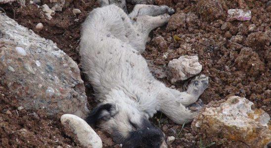 Konya'da tüyler ürperten köpek kırımı