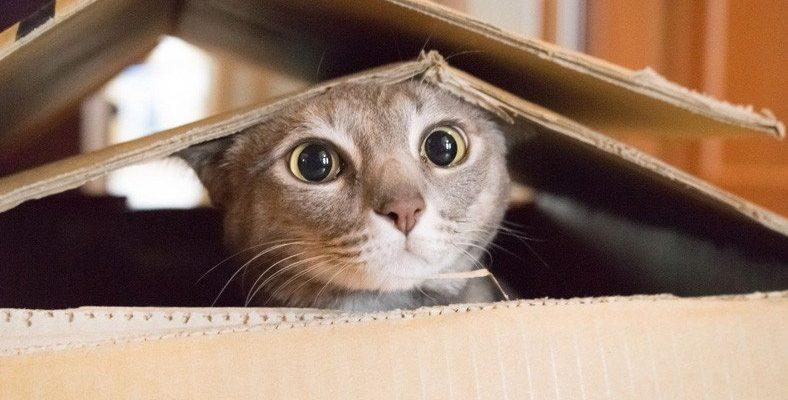 Bilim İnsanları, Oturup Kedi Videoları İzleyecek Gönüllüler Arıyor